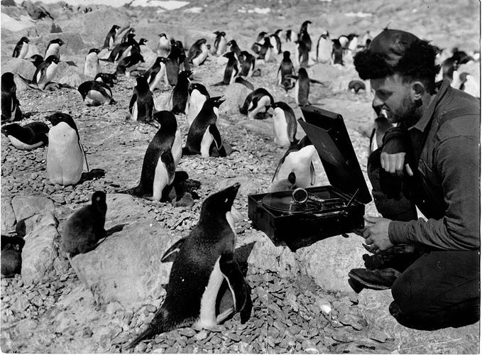 Douglas-Penguine-Music-1931